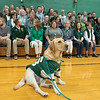 Oakmont Regional High School presented the schools Special Olympics National Banner during the school's Pep Rally on Wednesday, Nov. 27, 2019. Hanging out at the rally in a football jersey was Merle the Police K9 comfort dog. SENTINEL & ENTERPRISE/JOHN LOVE
