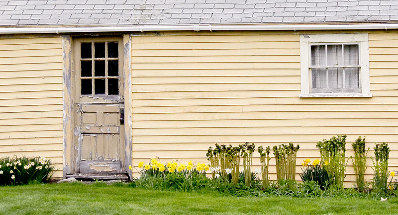 Yellow House With Daffodills And Ferns