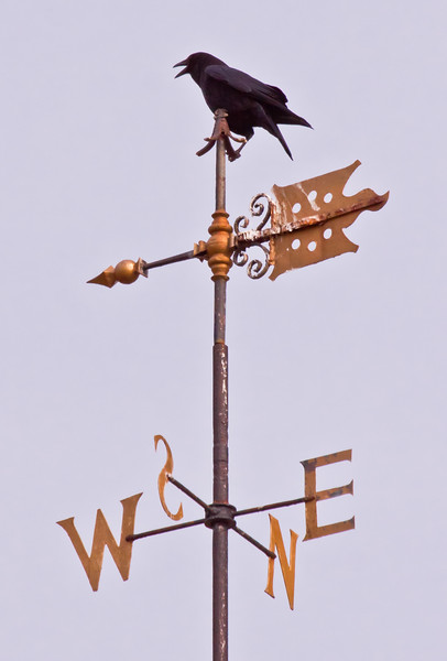 """Which Way Do I go?"" Crow On Weathervane"