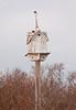 antique birdhouse with hand made, folk art cod fish weathervane, Popham Maine