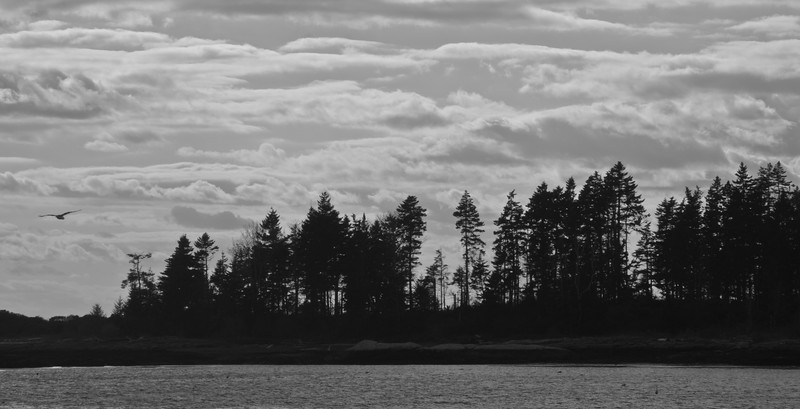 West point Village, Phippsburg, Maine silhouetted trees, sky, clouds