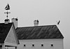 Sea gulls on roof and taking off from roof of house with cupola and weathervane, chimneys, black and white, Phippsburg, Maine