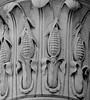 Latrobe Corn