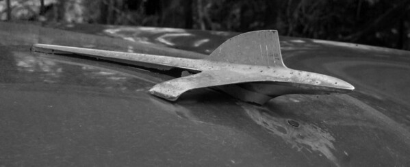 "Antique Packard, hood ornament and grill detail, Maine antique car. Black and White, ""Bird of the day"""