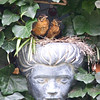 "North Amercian robin nestlings, chicks in a wall planter on wall covered with English ivy. We call the planter unceremoniously ""The Head."" She was a gift to us and is made of carved stone. The robins liked the nest there very much. Phippsburg, Maine"
