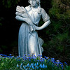 Wheat Girl, garden statue with Valerie Finnis grape hyacinths and Pulmonaria, or Lung Wort, my coastal Phippsburg Maine garden