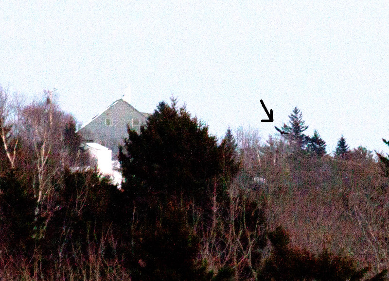 Turkey Vulture, January 22, 2014, 4:40pm, as seen from West Point looking east to Small Point, the building on the left is on Morse Mountain, Phippsburg Maine
