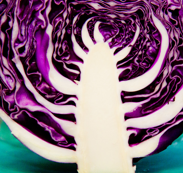 Purple cabbage (some call this Red cabbage) center detail, Tree Of Life? Fresh vegetable harvest, late summer, Phippsburg, Maine, brassica family