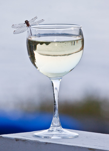 dragonfly on rim of glass of white wine, probably Chardonnay, but maybe Pinot Grigio. I don't recall. :-) All good! The glass was sitting on the rail of my deck overlooking the ocean. I had the camera in my lap as I was photographing birds when the dragonfly landed.