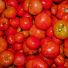 assorted tomatoes from summer harvest, Phippsburg Maine
