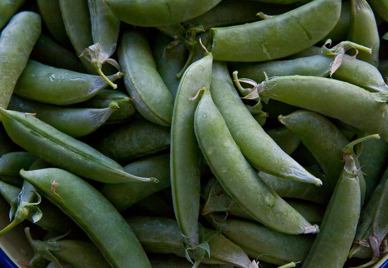 Peas, Pease pretty please! Sugar Snap Peas in the pod, fresh green, summer harvest, vegetables, Phippsburg, Maine