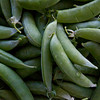 Peas, Pease pretty please! Sugar Snap Peas in the pod, fresh green, summer harvest, vegetables, Phippsburg, Maine