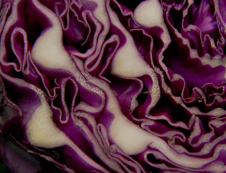 purple cabbage detail, sliced half