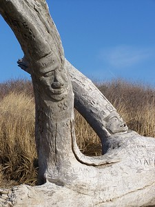 carved driftwood, Head Beach, Phippsburg, Maine, Hermit Island. This is about twelve feet tall and covered with carved names, figures and dates. A true piece of Americana!
