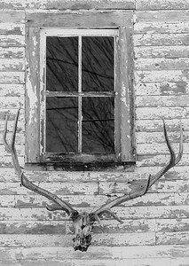 antlers and skull, black and white