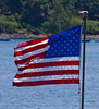 American flag with Common Tern sitting on top, Phippsburg, Maine