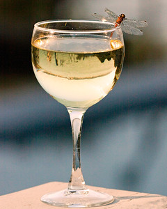 Dragonfly on white wine glass, summer