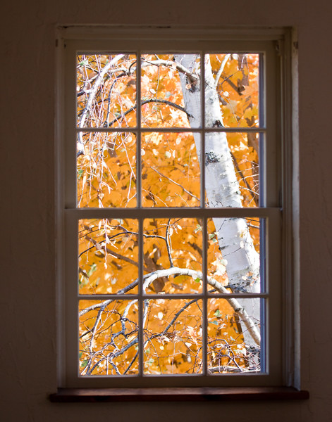 Birch with fall foliage in an old fashioned window, Phippsburg Maine