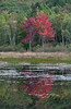 Red Maple trees in full fall colors reflecting in a pond, Acadia National Park, Mount Desert Island,, Maine, September 2012