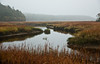 Dromore Bay, Phippsburg Maine, October. Classic salt marsh habitat for waterfowl and mammals such as deer and mink.