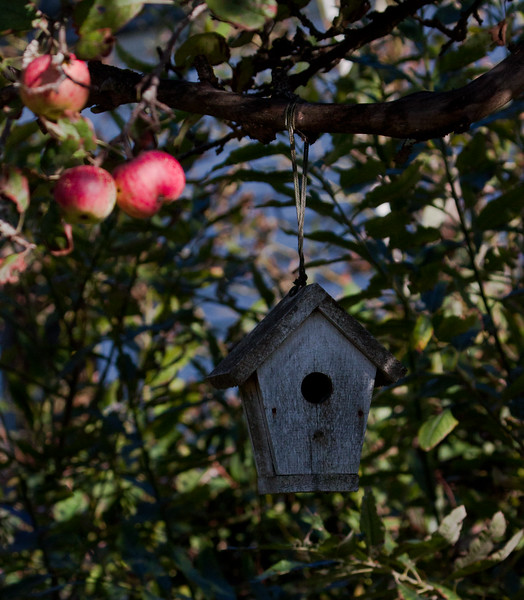 bird house and apples, fall in Maine