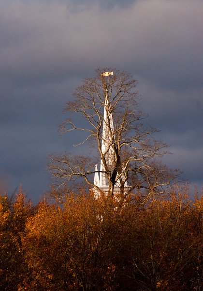 steeple of the Phippsburg Center Church on Parker Head Road, Phippsburg Maine, wlith fall foliage. The tree in the foreground of the steeple is the historic English Linden tree.