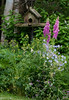 Pink foxgloves and  blue geraniums with a rustic, wooden bird feeder.  Phippsburg, Maine coastal garden in late June