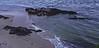 Sand and gentle surf, marine scenic, ledge, rock, ocean, Atlantic, Small Point, Phippsburg Maine