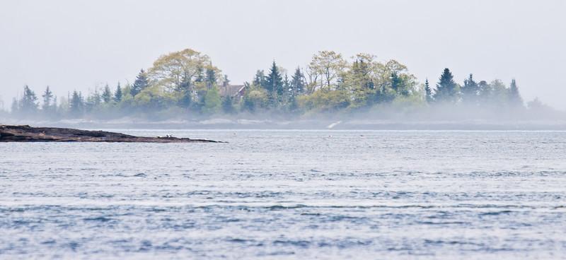 Spring fog, Maine Scenic