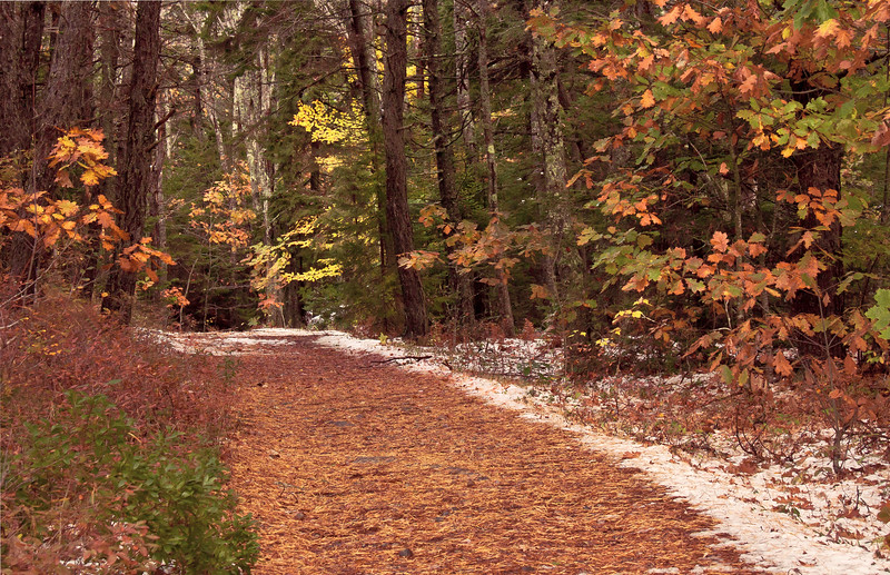 Woodland path with fall foliage and first snow, Phippsburg Maine, Sebasco Harbor