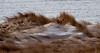 Sand dunes with snow, Phippsburg, Maine, Popham Beach State Park,