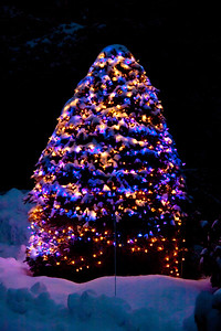 Christmas tree with blue and white lights in snow at night in my yard, Phippsburg, Maine. Happy Holidays to you all!