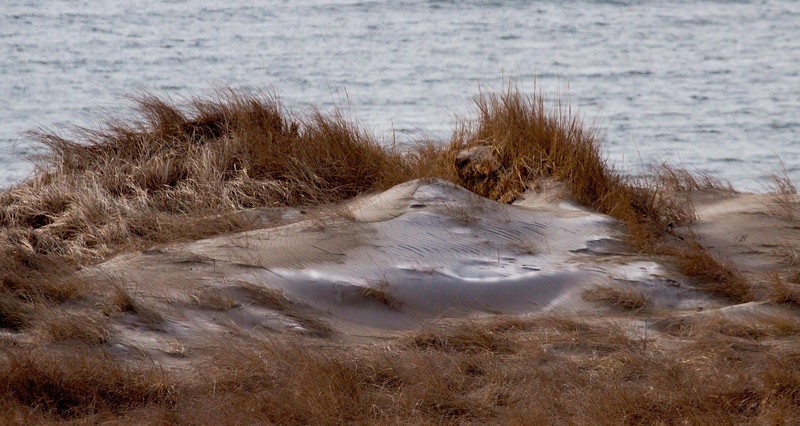 Sand dunes in snow, Phippsburg, Maine, winter on Popham Beach