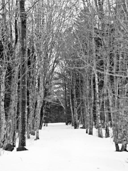 Fort Baldwin trail, winter scenic view in black and white, Phippsburg Maine