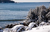 gorgeous Maine coastal scene in winter, Atlantic ocean with snow on trees, Hermit Island, Cape Small Harbor, PHippsburg Maine on Casco Bay