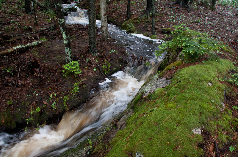 spring flood stream, Phippsburg Maine, Sprague River upstream, overflowing from spring rain, June