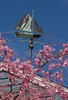 Sailboat weathervane in sea of weeping cherry, spring, Phippsburg Maine