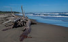 Seawall Beach, Phippsburg Maine looking east with driftwood. Main