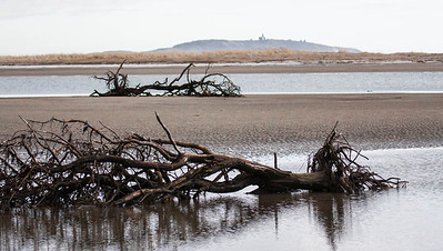 driftwood with Seguin Island Lighthouse, Popham Beach State Park, winter, Phippsburg Maine