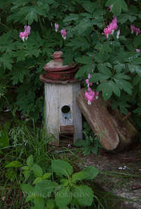A rustic bird house hidden amongst Bleeding Hearts in a Phippsburg, Maine garden, June