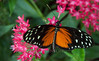 """We visited the Key West Butterfly and Nature Conservancy in Key West. It was a moving experience. It is set up as if the visitor is inside a giant terrarium amidst the butterflies (over 1500!), exotic birds and flowers. I recommend it for anyone giong to Key West. For more, see <a href=""""http://www.keywestbutterfly.com/info.htm"""">http://www.keywestbutterfly.com/info.htm</a>,"""