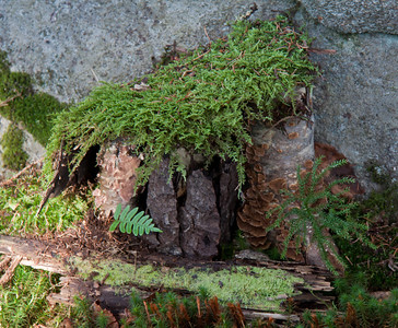 image 3, Fairy house in the forest, Phippsburg Maine