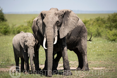 Elephants portrait
