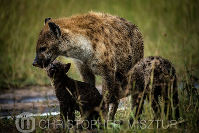 Hyena family portrait