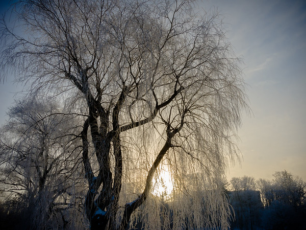 sunrise through iced willows