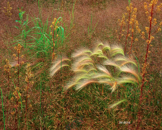 Textures In Grass I