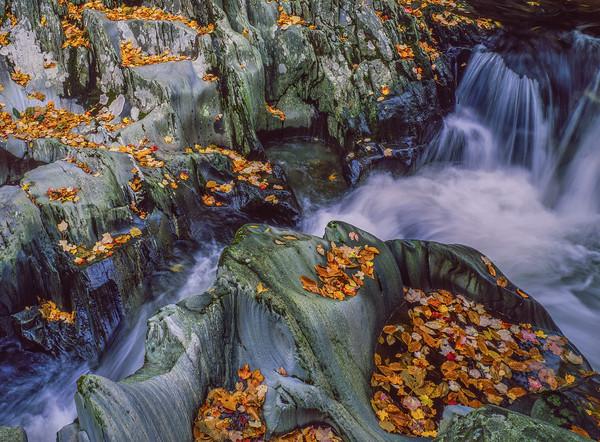 Rocky Stream & Fall Leaves I