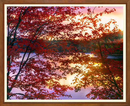 Sunset Through Red Leaves, Walden Pond  II