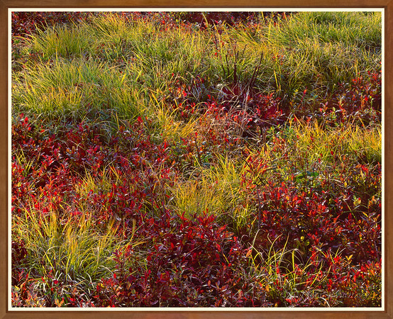 Blueberries & Grasses II