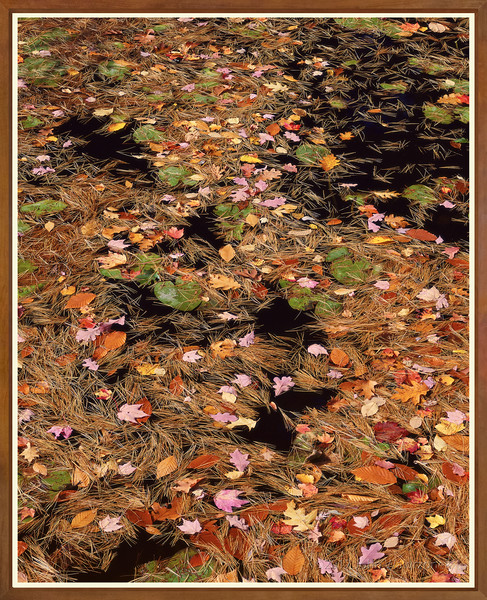 Pine Needles, Leaves and Lily Pads